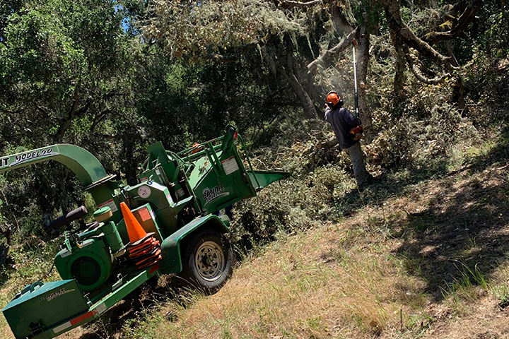tree maintenance monterey